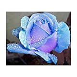 Lecimo 5D Diamond Painting Crystal Rhinestone Craft para la decoración de la pared del hogar (Blue Rose 30 * 30cm)
