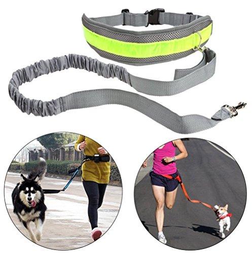 DREAMLAND Reflektierende Rennen Hundeleine - Nylon Jogging Hundeleinen Hundehalsband - Zugseil Außensporttraining Harness - Ideal zum freihändigen Joggen, Spazieren und Wandern von Hundefreund