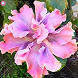 Shopmeeko 100 STÜCKE verschiedene farben der orientalischen mohnpflanze schöne bonsai blume pflanze garten topfpflanzen hof balkon dekoration: 4