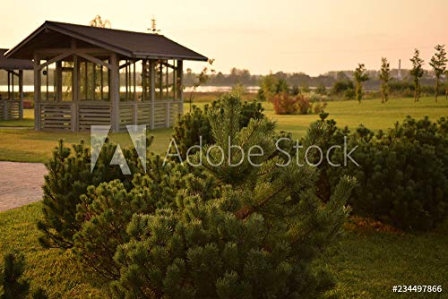 druck-shop24 Wunschmotiv: Landscape Young Pine and Arbor, a Beatiful and Peaceful Place for Meditation and Relax. #234497866 - Bild auf Alu-Dibond - 3:2-60 x 40 cm / 40 x 60 cm