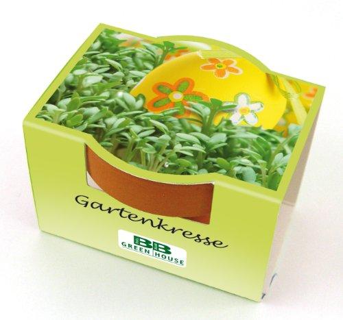 Minipflanzset Gartenkresse