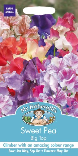 mr-fothergills-17078-big-top-sweet-pea-flower-seeds