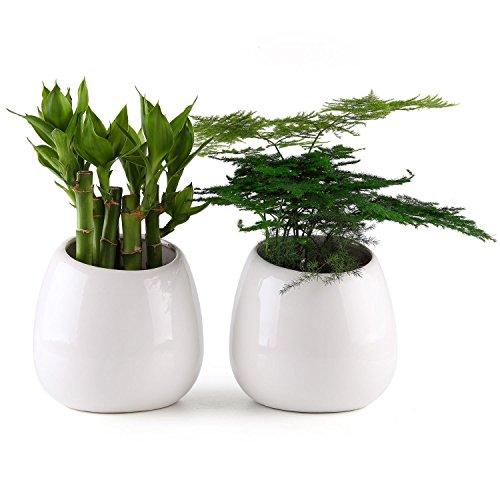 T4u piccolo ceramica bianca fioriera a muro o pensile, 10cm x 6cm x 10cm (l x w x h), confezione da 2