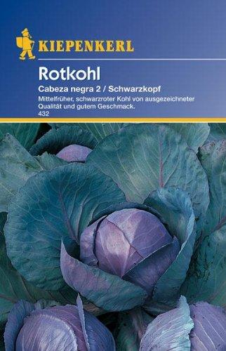 Kiepenkerl Rotkohl Schwarzkopf 2