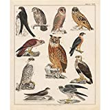 Best Home Collection Bird Houses - Meishe Art Poster Print Retro Vintage Colorful Birds Review
