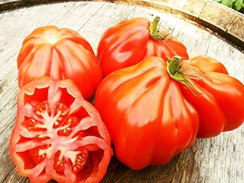 RWS 1000 graines de tomates Coeur de boeuf, tomates beefsteak, Oxheart géant