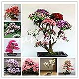 Rare Sakura Bonsai Fiore Nani Piante Giapponese Cherry Blossoms Fiore di ciliegio Bonsai per la casa Giardino Bonsai 10 Pezzi: Army Green