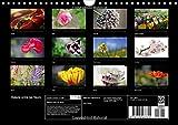 Image de Balade Entre Les Fleurs: Photos De Fleurs Des Champs Et De Jardins