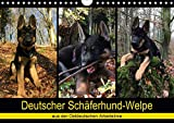 Deutscher Schäferhund-Welpe - aus der Ostdeutschen Arbeitslinie (Wandkalender 2020 DIN A4 quer): Dieser tierische Kalender begleitet einen 8 Wochen ... (Monatskalender, 14 Seiten ) (CALVENDO Tiere) -