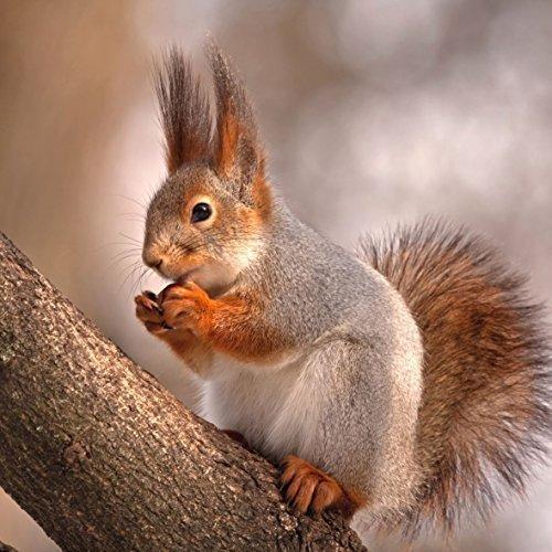 marron rouge écureuil Paquet de 20 Papier Serviettes 13 \