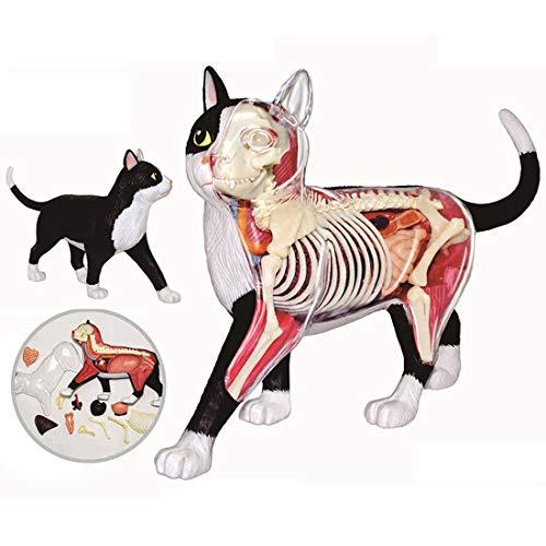 K9CK Tiere-Modell, 4D Anatomiemodell Medizinische Tierorgane Modell Schwarz und Weiß Katze Anatomie Modell - 28Pcs
