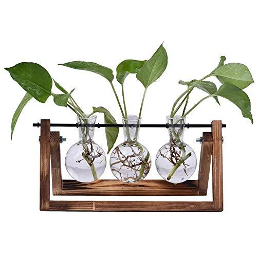 SUNREEK Desktop Glas Übertopf Vase, 3Glas Leuchtmittel Vasen Retro Solid Holz Ständer Hydrokultur Pflanzen Home Garten Hochzeit Dekor -