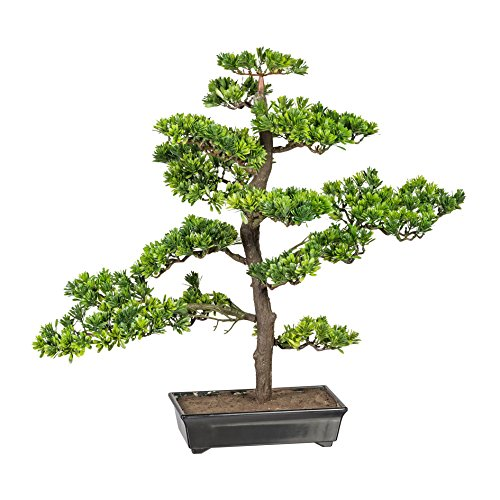wohnfuehlidee Kunstpflanze Bonsai Podocarpus Grün, Inklusive Kunststoff-Schale, Höhe ca. 63 cm