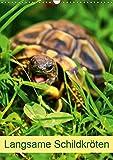 Langsame Schildkröten (Wandkalender 2019 DIN A3 hoch): Einzigartige Reptilien: Land- und Wasserschildkröten (Planer, 14 Seiten ) (CALVENDO Tiere)