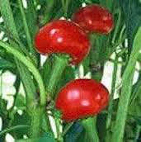 Poivre, les graines rouges doux cerise, Heirloom, biologique, sans OGM, (100 graines), Grand rouge cerise Poivron est un piment doux rond ressemblant à une cerise.