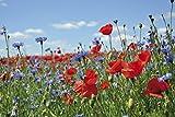 1art1 55244 Blumen - Wildblumen-Wiese Mit Mohn- Und Kornblumen Selbstklebende Fototapete Poster-Tapete 180 x 120 cm