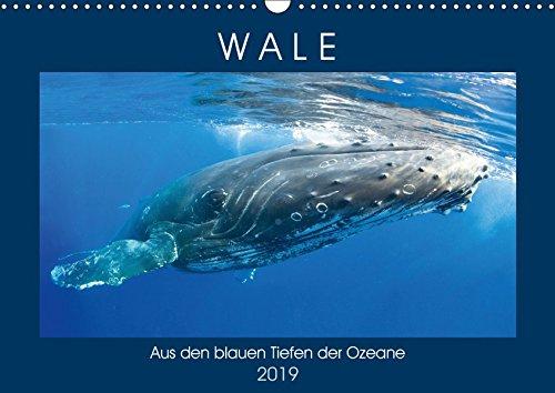Wale: Aus den blauen Tiefen der Ozeane (Wandkalender 2019 DIN A3 quer): Wale: Freiheit in den Tiefen der Meere (Monatskalender, 14 Seiten ) (CALVENDO Tiere)