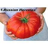 Sisaki 100pcs graines de tomate géantes de jardinage à la maison légume bio héritage Ensembles