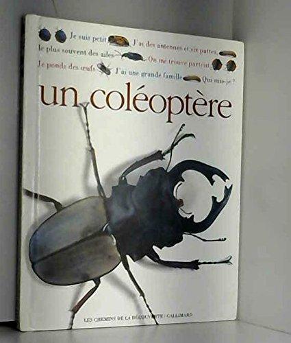 Qui suis je ? un coleoptere 102097