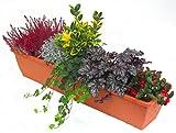 mehrjähriges, winterhartes Balkonpflanzen-Set für Balkonkästen 80 cm lang