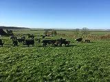 T Bone Irisches Angus Rind Weiderind Dry Aged Irish Beef €57,95 KG Vergleich