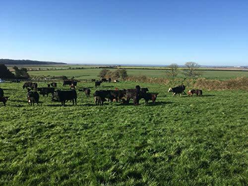 Ochsenbäckchen Irisches Angus Rinderbacken Bäckchen Rind Weiderind Irish Beef €18,99Kg