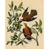 Audubon il museo-Outlet-Zenaida-162-Decorazione pensile