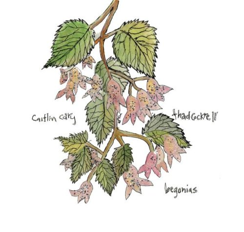 Begonias - Begonia-arten