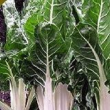 SANHOC Samen-Paket: Lucullus Swiss Chard Seeds -