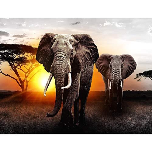 Fototapeten Afrika Elefant 352 x 250 cm - Vlies Wand Tapete Wohnzimmer Schlafzimmer Büro Flur Dekoration Wandbilder XXL Moderne Wanddeko - 100{414c69f3970bda6abb36f9aba865e44ca30ff390aee5d9d6c2e826d1079b458c} MADE IN GERMANY - 9236011a