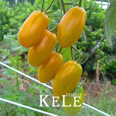 Pinkdose® Gemeinsame gelbe Tomaten Bonsai, Obst und Gemüse Topf Tomatenpflanzen Balkon für Hausgarten 100 Stück/Pack, 0bb6Rl: 6