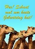 Geburtstagskarte mit Musik, Din A5 - Singende Kamele - Soundkarte