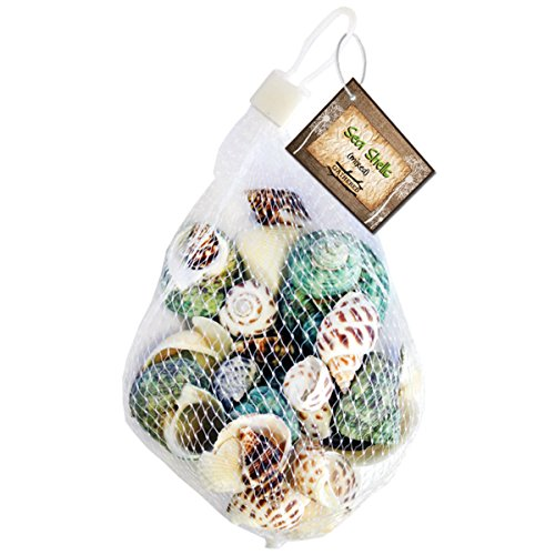 Gathered, by BCI Crafts Sea Shell, Mixed