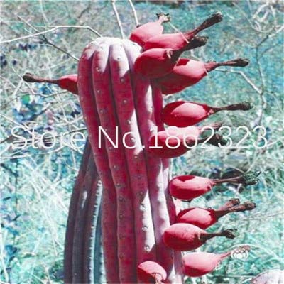 AGROBITS semi: 200 pc rari Piante di Aloe Vera Edi bellezza Edi Cosmetic Vegetas E Frutta Bonsai Piante per la casa & amp; Garden Decor: 21