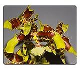 MSD Mousepad Bild-ID 19676986dieses Bild wurde in Xiamen Botanischer Garten China Orchidee ist die Häufigste und diverse blühenden auf der Planet jede der Differe