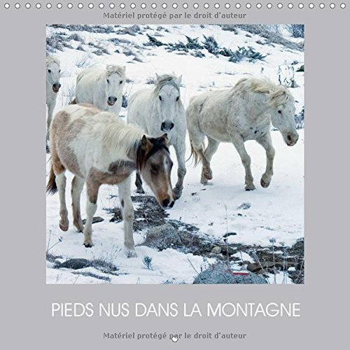 Pieds Nus Dans La Montagne 2017: Des Chevaux En Liberte (Calvendo Animaux) par TERRY