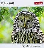 Eulen - Kalender 2019: Kalender mit 53 Postkarten
