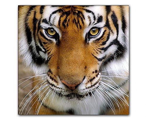 DEINEBILDER24 - Wandbild XXL Quadrat Tigerkopf, Blick nach vorne 80 x 80 cm auf Leinwand und...