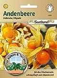 Andenbeere Erdkirsche Physalis Saatband für Balkon & Terrasse für den Frischverzehr schmackhaft vitamninreich 43030