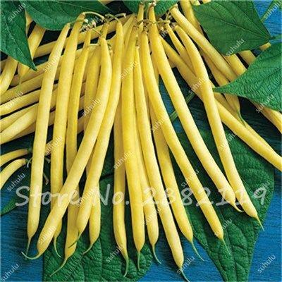 10 Pcs Multi Color long haricots Graines santé Graines de légumes biologiques, la croissance naturelle pour jardin délicieux Bon savoureux 11