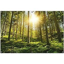 Wallario Garten-Poster Outdoor-Poster, Sonnenstrahlen im Nadelwald mit Moos und Farn in Premiumqualität, für Den Außeneinsatz Geeignet