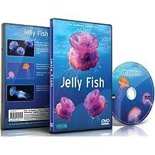 DVD Aquarium - Méduse au sein d'aquariums et mers tropicales
