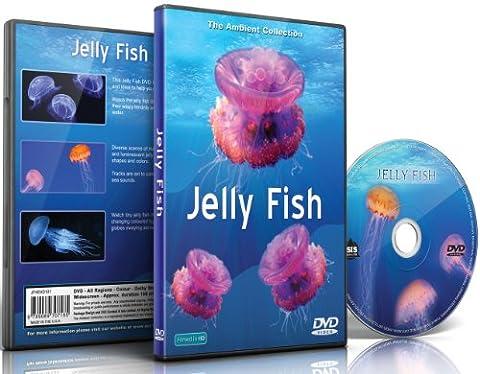 Quallen DVD