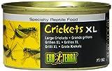 Exoterra Aliment pour Reptiles et Amphibiens Crickets Large 34 g