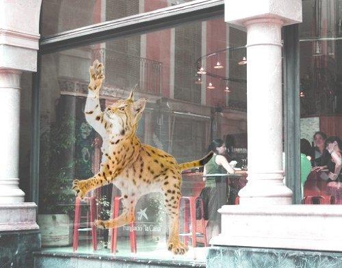 Tattoo-lynx (Fenstersticker No. 371lauert Lynx Fensterfolie Fenster Tattoo Glas Aufkleber Fenster Kunst Fenster DÃ © COR Fensterdekoration Fenster Bild, Maße: 191cm x 144cm)