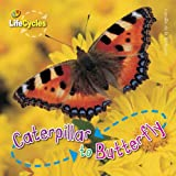 Caterpillar to Butterfly (Lifecycles)