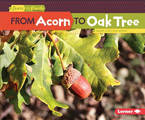 Oak Finish Media (From Acorn to Oak Tree (Start to Finish, Second Series) (English Edition))