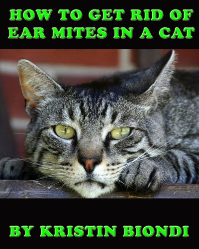 how-to-get-rid-of-ear-mites-in-a-cat