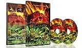 Fire DVD e Fish Fresh Fish DVD - 2 Set da DVD Camino e Acqua Dolce - Una Combinazione Rilassante di Accoglienti Caminetti e Acquari Rinfrescanti 2016
