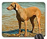 Gaming-Mauspads, Mauspad, Hund Weimaraner Animal Pet Animal Portrait